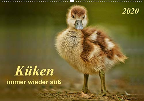 Küken - immer wieder süß (Wandkalender 2020 DIN A2 quer): Großer Kopf, großer Schnabel,große Augen und unwahrscheinlich niedlich - Küken. (Monatskalender, 14 Seiten ) (CALVENDO Tiere) -