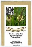Spitzwegerich - Plantago lanceolata - Arzneipflanze des Jahres 2014-500 Samen