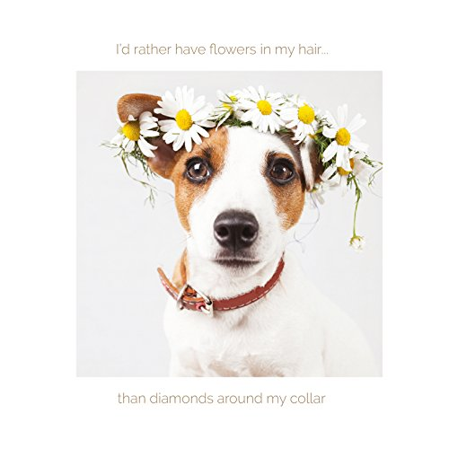jack-russell-with-flower-crown-dog-greetings-card