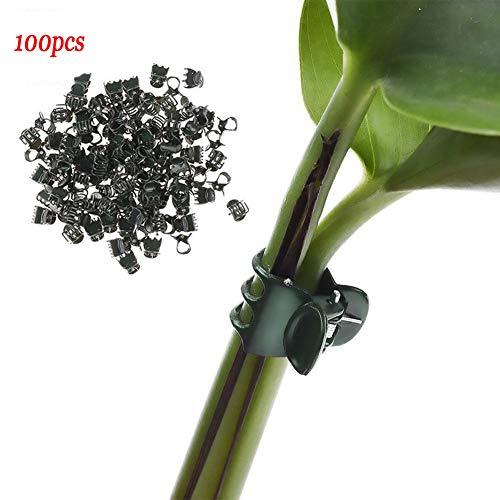Alicer Clip per Piante 100 Pezzi Clip Stabile, mollette per Piante, riutilizzabili, in plastica, per fioriere, Clip di Supporto per Orchidee per la Cera in Verticale, Show, 100 Pezzi