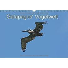 Galapagos' Vogelwelt (Wandkalender 2018 DIN A3 quer): Galapagos' Vogelwelt ist teilweise einzigartig; Albatrosse, Prachtfregattvögel und verschiedene ... zu beobachten (Monatskalender, 14 Seiten )