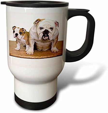 3drosa British Bulldog MaleTravel Tazza, 396,9 Gram, 8.57 Acciaio Inox, 8.57 Gram, x 11.83 x 15.24 cm 9bcc58