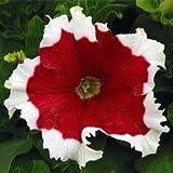 100pcs / bag Climbing semi Mandevilla sanderi, Dipladenia sanderi semi, bonsai fiore pianta per la decorazione domestica e cortile pentola muro
