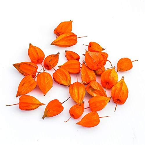 Kürbisplanet 25 echte Lampionfrüchte Physalis (Lampionblume): exotische Früchte orange Dekofrüchte | Frische Physalis-Früchte | Leuchtend orange