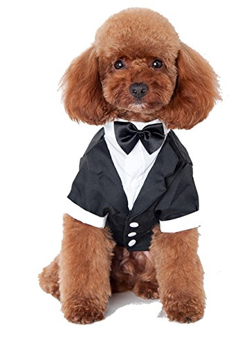 Adorable Small Dogs& Cats Breed Black & White Tuxedo Suit Dress Up Outfit Jumper Costume Bow Tie ()