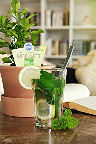 Kaffir-Limette,12er Topf,kräftige,schöne Pflanzen (1Pflanze)