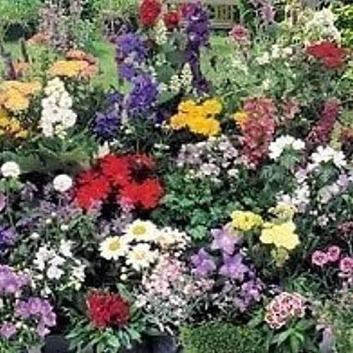 Perennial flowering plants amazon south eastern horticultural pack x24 mixed varieties garden perennial plug plants starter value pack mightylinksfo