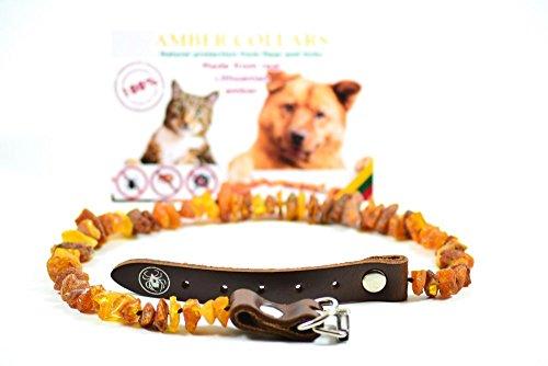 collar-de-ambar-para-perros-y-gatos-con-la-hebilla-de-cuero-ambar-baltico-sin-procesar-elegance-tick
