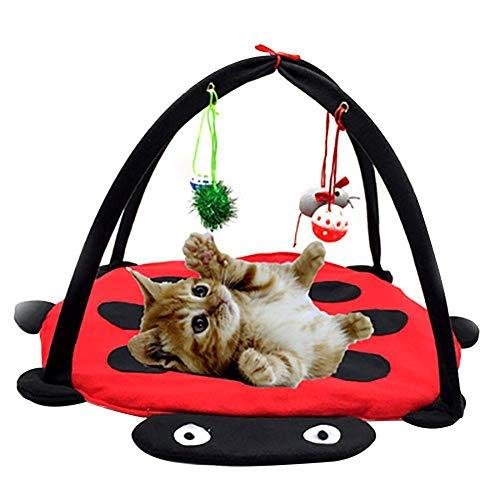 Funihut Katzenbett Katzenzelt Katzenkissen faltbar Tierkorb Tierbett Katzen mit Kitten Interaktives Katzenspielzeug Box mit Vier individuelle Spielzeuge Katze oys