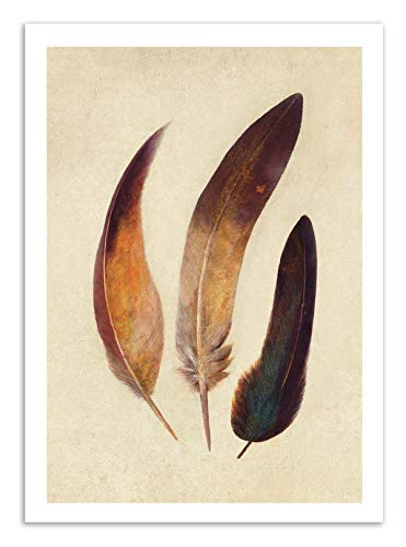 Art-Poster - Three Feathers - Terry Fan -