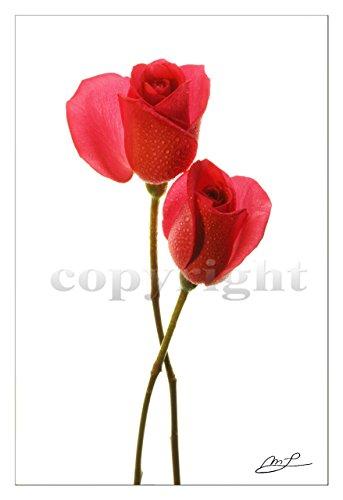 Leinwanddruck 90x60 cm, 'geliebt' Rosen, 2 cm Keilrahmen im Galerie-Stil, Rahmen-Effekt gespiegelt, inkl. Aufhängeset für Leinwand, Photo der Photokünstlerin Margaret Lemmen
