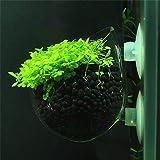 Rejoicing Aquarium-Pflanzgefäß für Wasserpflanzen, Landschafts-Becher, Aufzuchtbecken, Saugnapf, Mini-Punktmuster