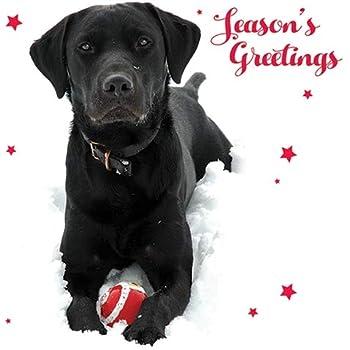 Black Labrador Robin Dog Puppy Snow Christmas Card