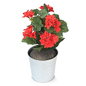 Closer To Nature HBC009RE – Begonia artificial, 24 cm, color rojo