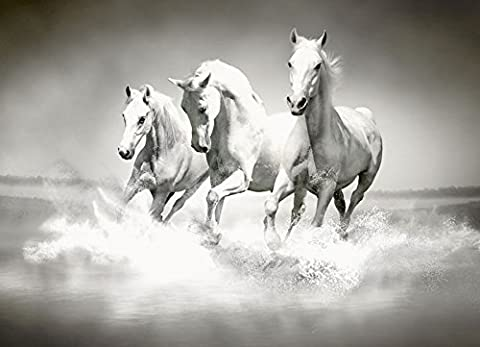 Artland Küchenrück-Wand Spritzschutz Hightech-Aluminium-Verbundplatten PureSolution Herde von weißen Pferden laufen durch Wasser Tiere Haustiere Pferd Malerei Schwarz/Weiß