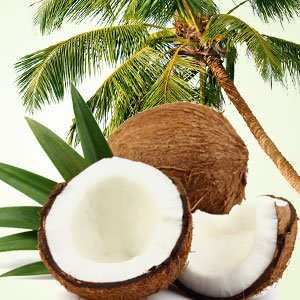 10ml-coconut-crazy-fragrance-oil-candle-making-home-fragrancing