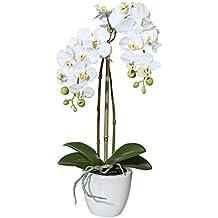 suchergebnis auf f r k nstliche orchideen. Black Bedroom Furniture Sets. Home Design Ideas