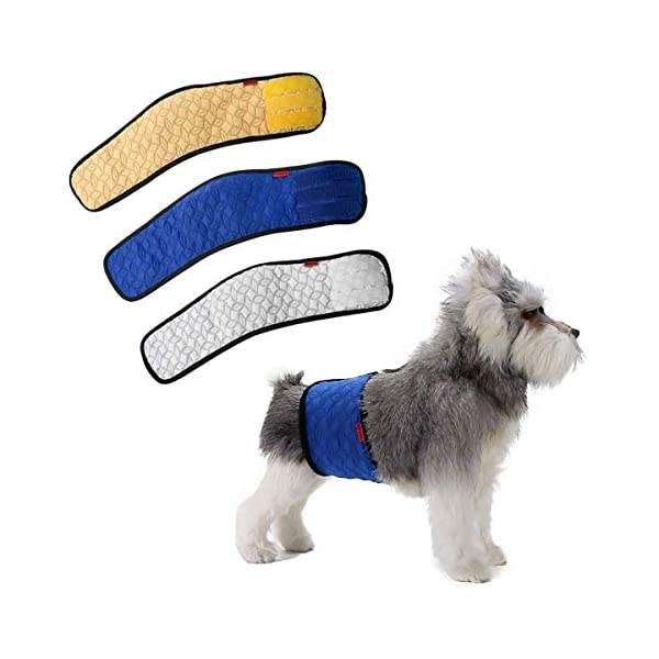 belly bands, Diapers and Belly Bands for Dogs, Dog Incontinence