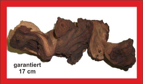 Mopani- Wurzel, garantiert 17cm, Aquarium, Terrarium