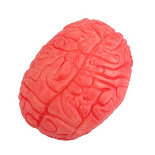 Beängstigend Spukhaus Menschliche Gehirn Organ Körperteil Grausigkeit Halloween Prop Dekor