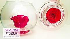 Idea Regalo - Premium-Rose.com Rosa Stabilizzata Rossa in vaso vetro tondo boule, sfera ideale come centrotavola con fondo effetto acqua.