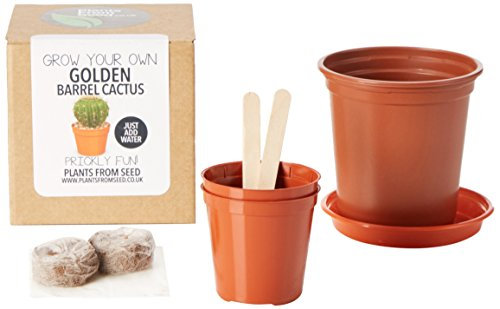 plants-from-seed-grow-your-own-golden-barrel-cactus