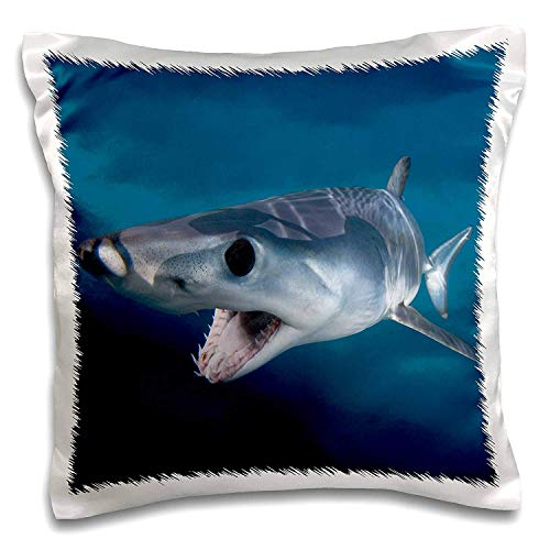 Akhy Shortfin Mako Shark Opening Mouth, Isurus Oxyrinchus, San Diego, California, USA, Eastern Pacific-Pillow Case, 18 X 18 Inches -