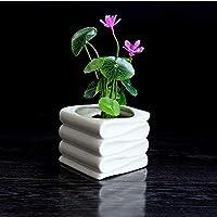 Vstylife Creativo Irregular hidropónico Maceta de cerámica Blanca Decorativa Bonsai macetas para jardín suculentas jarrones Porcelana