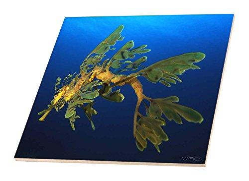 3dRose CT 46260_ 4grünen Sea Dragon-Phycodurus ziersalmler-in Esperance, Western Australien-Keramik Fliesen, 30,5cm (Western-keramik-fliese)