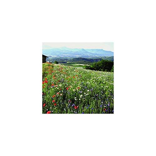 Mélange Paysage de France vegetalisation 1 kg pour 50 m2