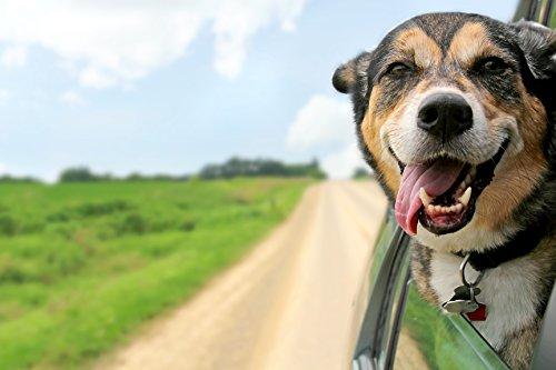 Hundemarke Aus Olivenholz Gravur Mit Name & Telefon Groß Vertrieb Von QualitäTssicherung Haustierbedarf