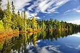 adrium 36777337 Forest Reflecting en Lacets 50 x 30 cm