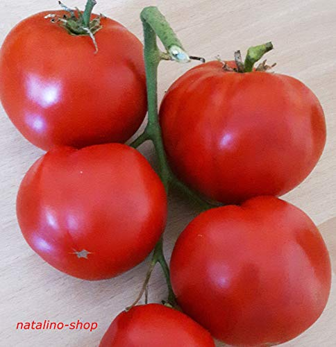 Portal Cool Tomato Saint Pierre 10 Samen alte Sorte aus Frankreich Beliebte Tomate sät