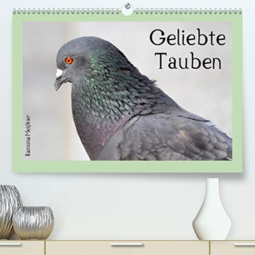 Geliebte Tauben(Premium, hochwertiger DIN A2 Wandkalender 2020, Kunstdruck in Hochglanz): Ausdrucksvolle Momente wunderschöner Stadttauben (Monatskalender, 14 Seiten ) (CALVENDO Tiere)