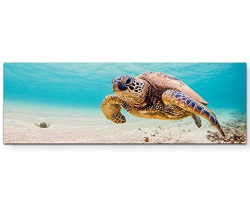 Leinwandbilder | Bilder Leinwand 120x40cm Grüne Meeresschildkröte im Pazifik