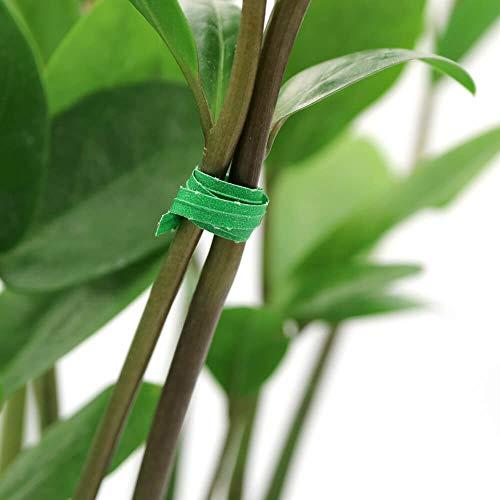 KINGLAKE 100 Stück 200 x 3 mm selbstsichernde Garten-Kabelbinder grün Pflanzenband Nylon verstellbar Reißverschluss Bänder Mehrzweck - Verstellbar Band