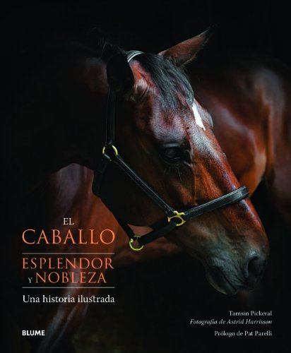 El caballo. Esplendor y nobleza por vvaa