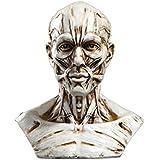 Modèle Humain Crâne Anatomie Muscle Mannequin de Dessin 10cm de Haut Blanc Antique