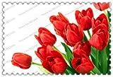 bulbi di tulipano 300true, tulipano, bulbi da fiore, piante da giardino, la crescita naturale, vaso bonsai per il giardino di casa