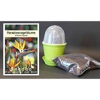 Seedeo - Kit de cultivo para ave del paraíso
