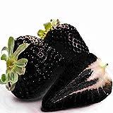 Keland Garten - Riesen Erdbeeren Obstsamen 50 Stück supersüß Extragroß wie Eier, Großfrüchtig aromatisch, geeignet für Ihr Garten, Balkon (schwarz)