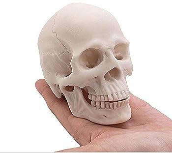 Collection Wert Kleine Größe Replica Realistische Menschlicher Schädel (Natur) 0