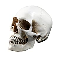 Tinksky Lifesize Human Skull Skeleton Model Replica Resin Medical Anatomical Tracing Medical Teaching Skeleton Halloween Decoration Statue