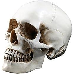 Tinksky Lifesize 1: 1modelo de calavera humano Replica Resina Médico trazos anatómico insegnamento médico esqueleto Halloween decoración estatua regalos de Halloween
