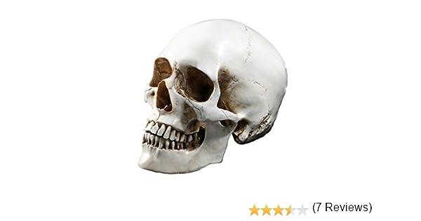 Tinksky LifeSize Mod/èle de squelette de cr/âne humain R/éplique R/ésine m/édicale anatomique calque Medical enseignement Squelette Halloween D/écoration Statue