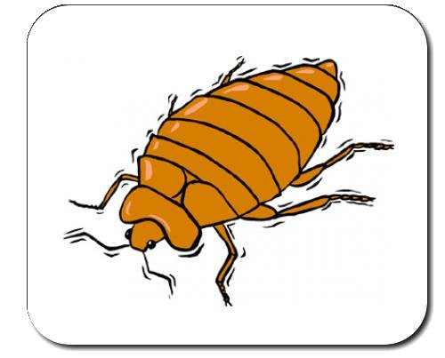 decorated-mouse-pad-with-the-image-of-bug-mite-insect-bedbug