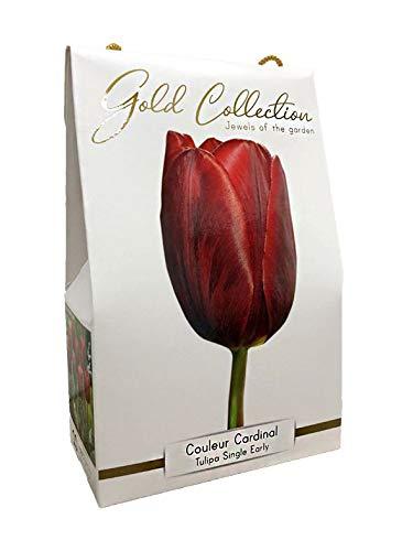 Bulbi 10 pezzi tulipano colore rosso cardinale in cofanetto idea regalo gold collection fiori rossi perenni da giardino profumati prato vaso 11/12 40 cm