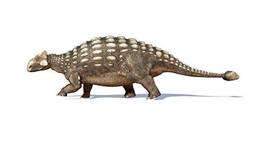 Leonello Calvetti/Stocktrek Images – 3D rendering of an Ankylosaurus dinosaur. Photo Print (96,01 x 53,34 cm)