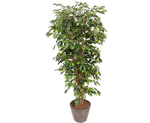 Ficus Benjamini Multistamm, Höhe 150cm – Kunstbäume Kunstbaum künstliche Bäume Kunstpflanzen Kunstpalmen Dekopalmen