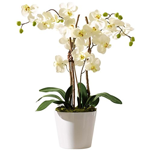 Orchideen-Arrangement Farbe